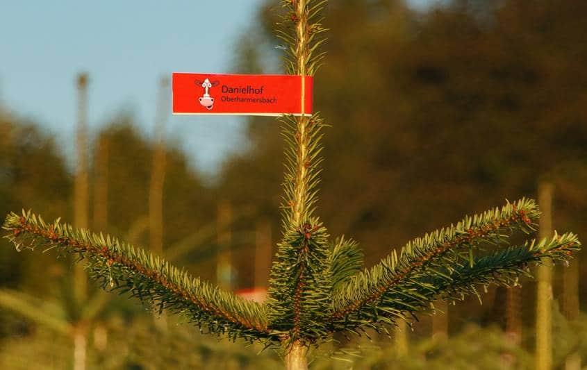 Gekennzeichneter Weihnachtsbaum