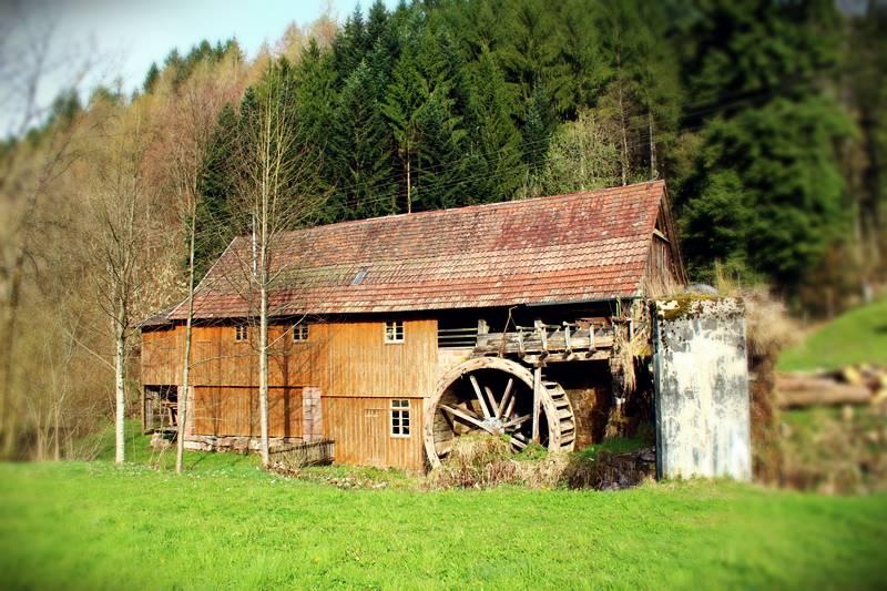 Gallussäge in Zuwald